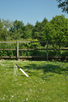 Cricket in the garden, in the shade of a tree